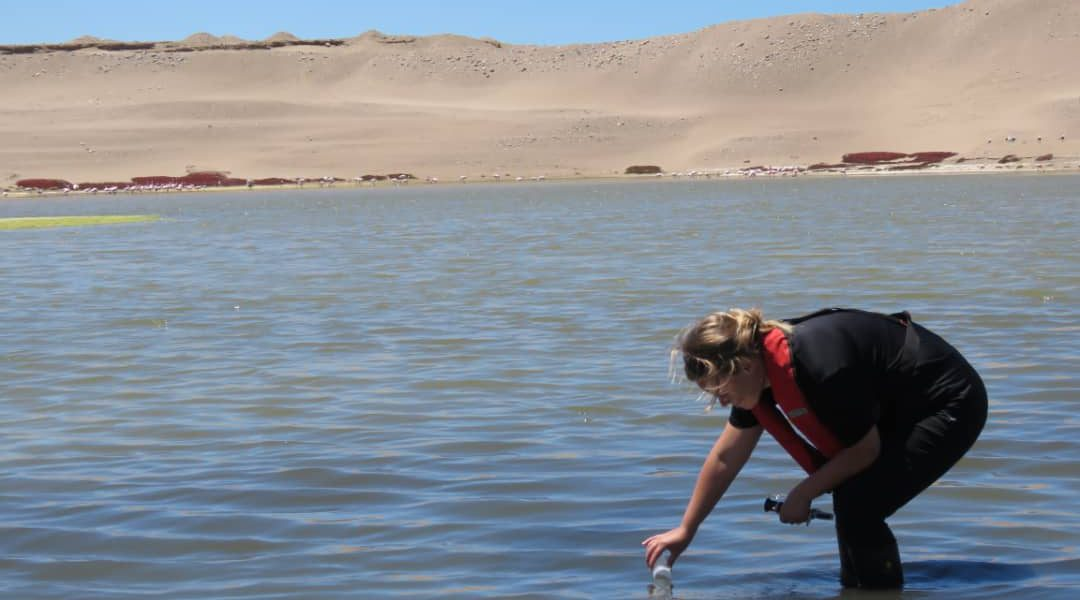 Marine Ponds Created by Namdeb's On-shore Diamond Mines Support Ecological Biodiversity